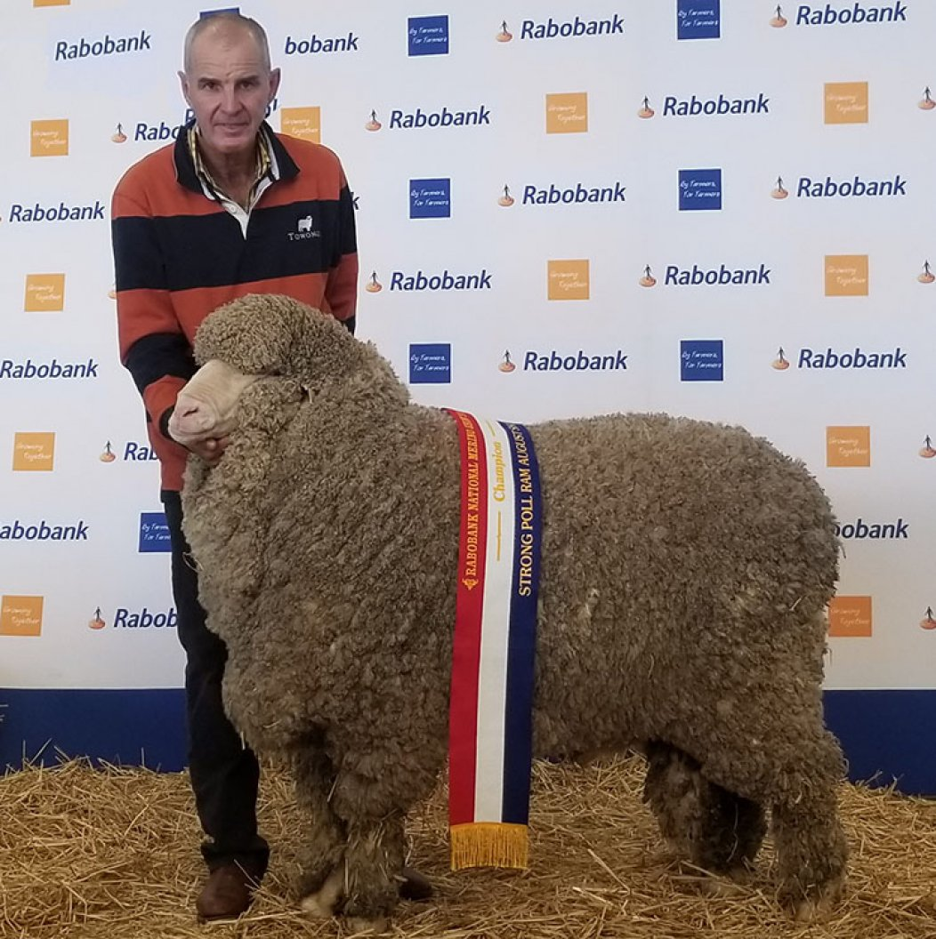 Rabobank National Sheep Show