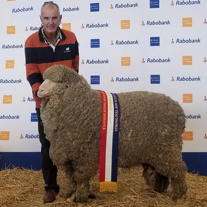 Rabobank National Sheep Show