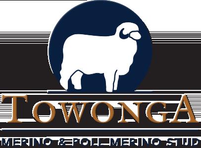 Towonga Merino & Poll Merino Stud